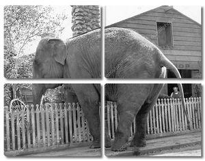 Любопытный слон