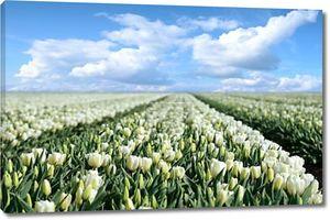 Мистический пейзаж с пути в разгар tulip областях Фло