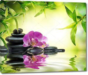 альтернативные массаж в бамбук сад на воде