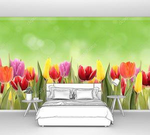 Цветы тюльпанов в траве