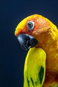 Яркий желтый попугай