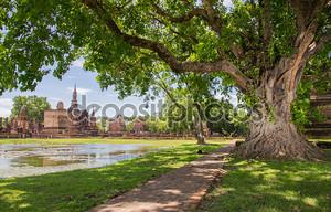плетеные корни большой Баньян в Сукотаи исторический парк, Таиланд