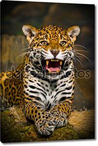 Ревущий ягуар