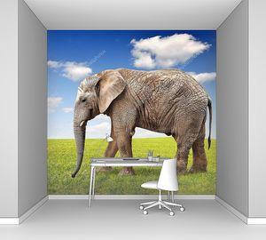 Старый Слон