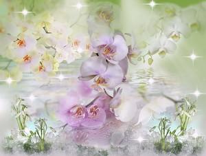 Прекрасные орхидеи в бликах