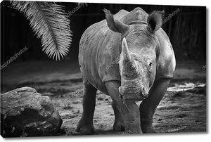 Черно-белый носорог