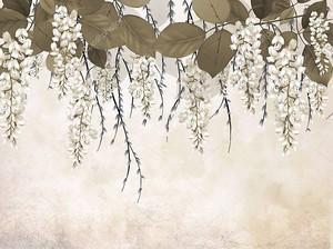 Свисающие белые цветы акации с листьями