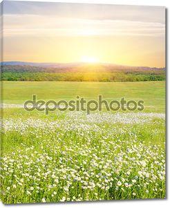Большое поле цветов на восход солнца.
