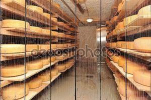 сыр коровьего молока