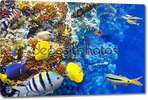 Фантастический подводный мир