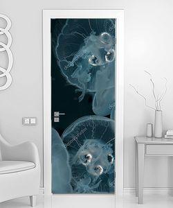 Прозрачные медузы