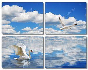 Изящные лебеди, купание в океане