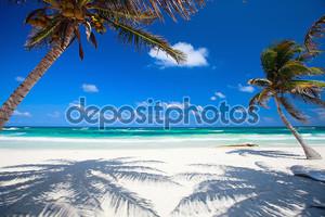 Кокосовые пальмы на пляже
