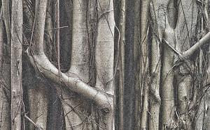 Сплетенные стволы деревьев