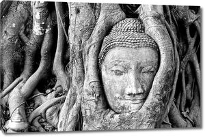 голова Будды, застрял в корни деревьев