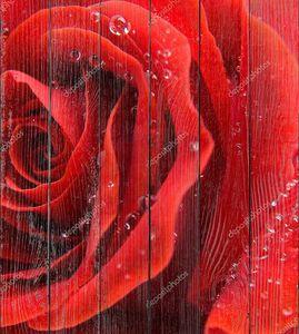 Яркая красная роза