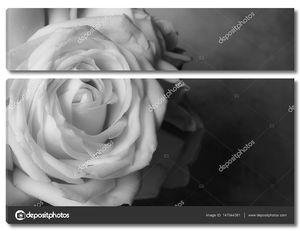 розовые цветки крупным планом на фоне