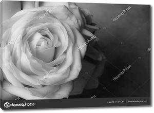 Розовый цветок крупным планом на фоне