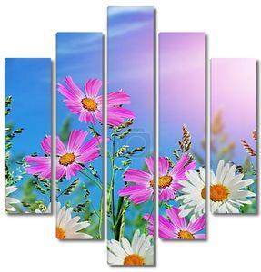 Цветы ромашки на фоне голубого неба