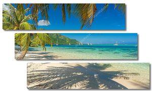 Кокосовые пальмы на пляже в Муреа, Таити