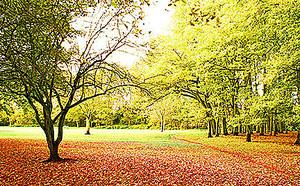 Поляна усыпанная листьями