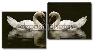 Два Лебединое делая фото символ любви