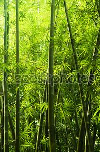 Бамбуковый лес. солнечный свет