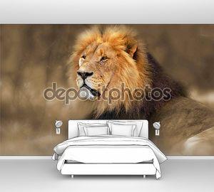 дикий африканский лев