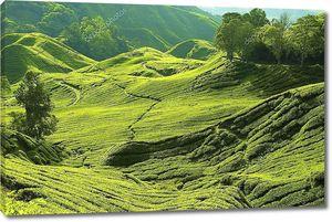 Чайная ферма