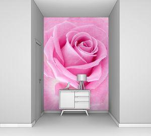 Розовая роза макрос