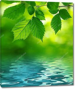Зеленые листья над водой