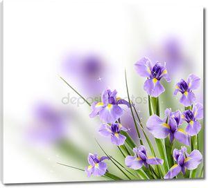 Цветок красивый Ирис на светлом фоне