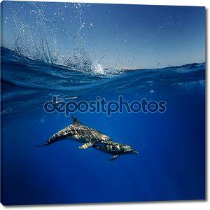 дружественные игривые Забавные дельфины