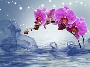 Орхидея на синем фоне