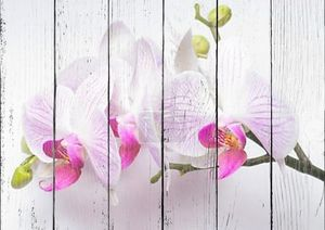 Орхидея изолирована на белом фоне