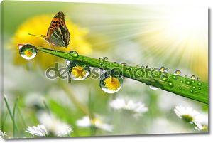 росы и бабочка