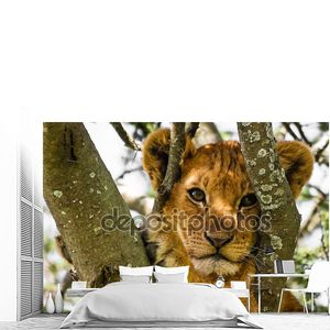 Милый Лев детеныш портрет