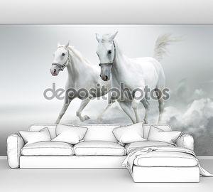 Белые лошади в галопе