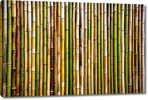 Бамбуковые стены Текстура
