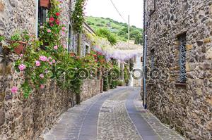 узкая улица цветов