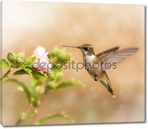 Мечтательный образ молодой мужской колибри зависания