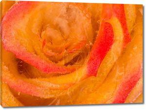 Замороженные розы аромат