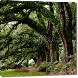 Линия древние дубы на парковой