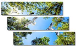 Чайки среди деревьев