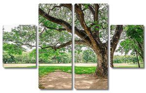 большое дерево на поле зеленой травы