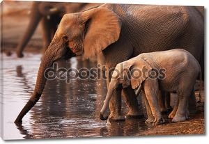 Слоны питьевой