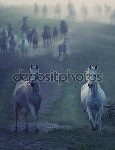 Дикие лошади, проходит через Двухетажний путь