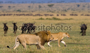 Большой женский Лев и львица