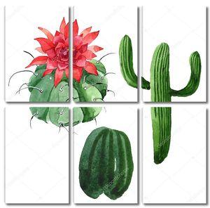 Зеленый кактус с цветоком