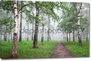 Утренний туман березовый лес